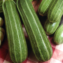 courgette-1