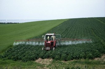 Farmer Spraying Potato Field