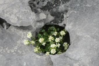 des fleurs dans la rocaille