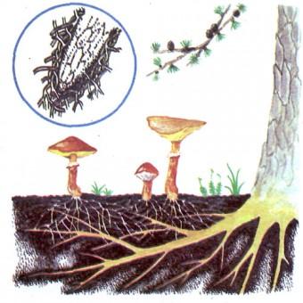 plantes en reseau
