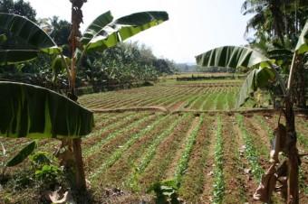 assolement riz haricots