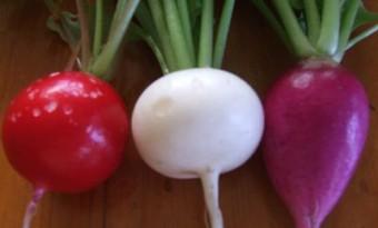 trois petits radis
