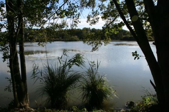 Notre balade du jour : un étang à Courtenay...
