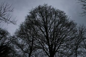 erable-ciel-gris